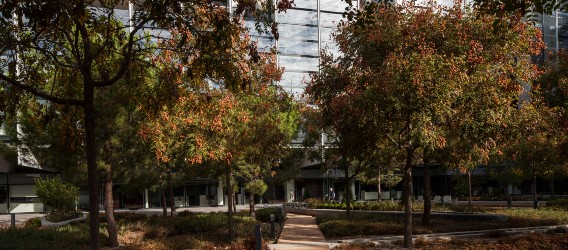 Shot of the trees in the Repsol Campus courtyard