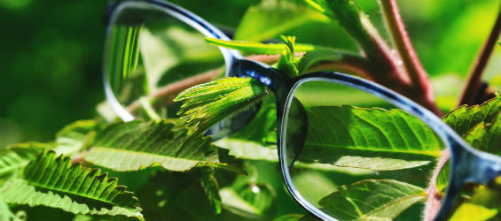 Pair of glasses over green leaves. Report archives.